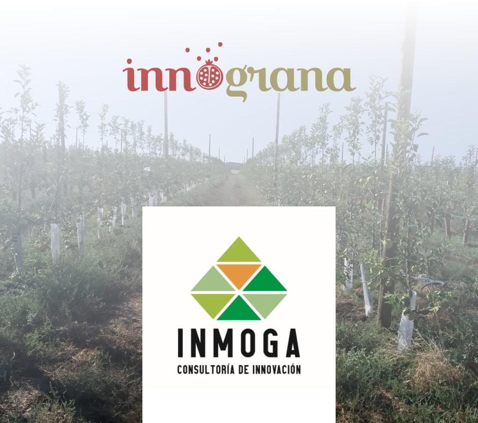 inmoga-ingrana
